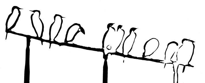 Cormorans solarisation